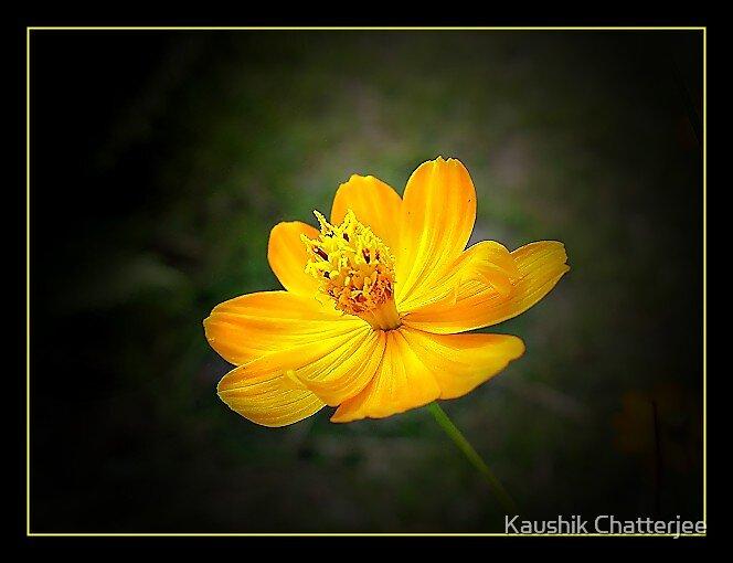 Little Shine by Kaushik Chatterjee