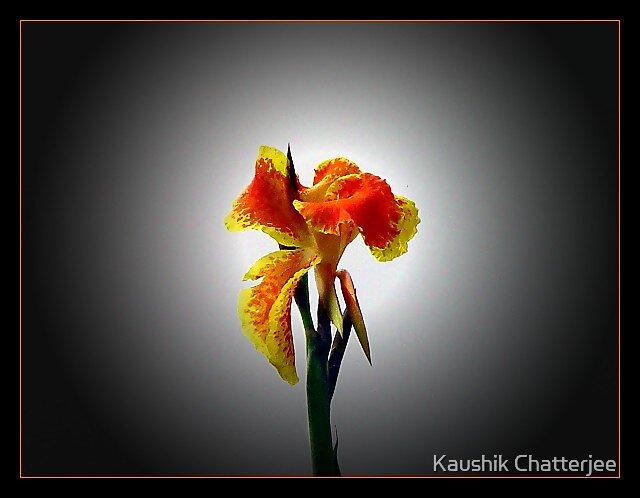 Bright by Kaushik Chatterjee