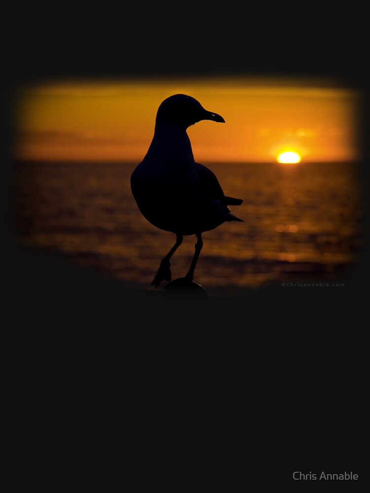 Seagull Sunset by yourstruly