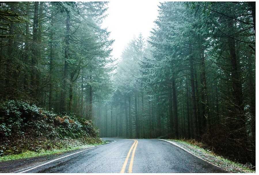 Image result for foggy pacific northwest mountain road