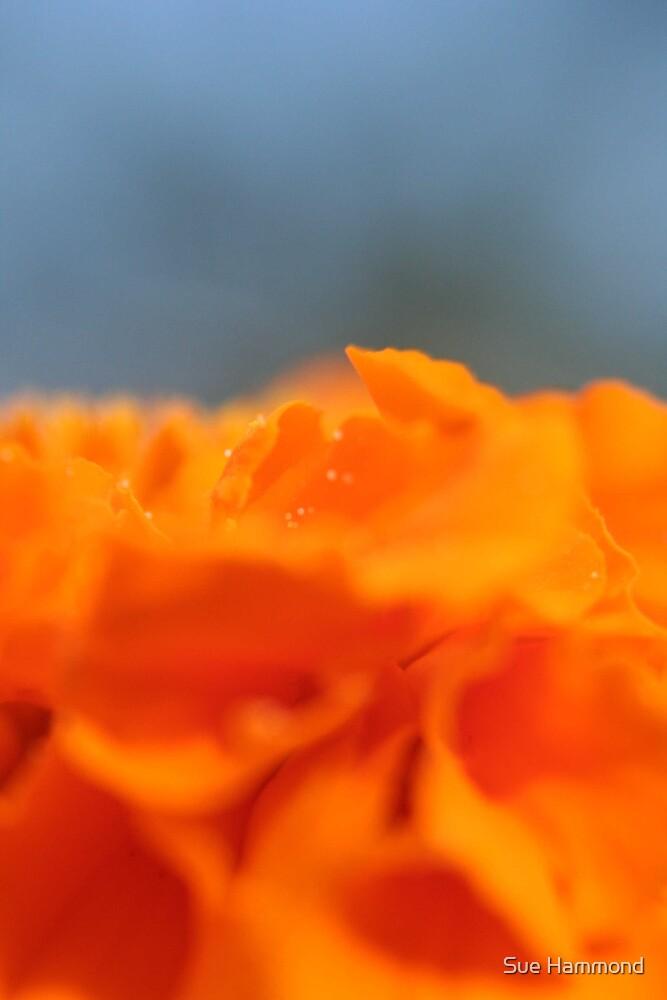 Burnt orange by Sue Hammond