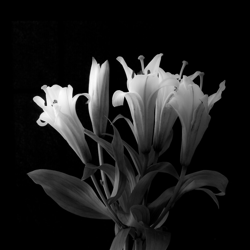 Beautiful Lily Still Life by David Thibodeaux