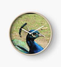 Peacock, Launceston Gorge Clock