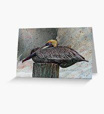 Pelecanus Occidentalis 2 Greeting Card