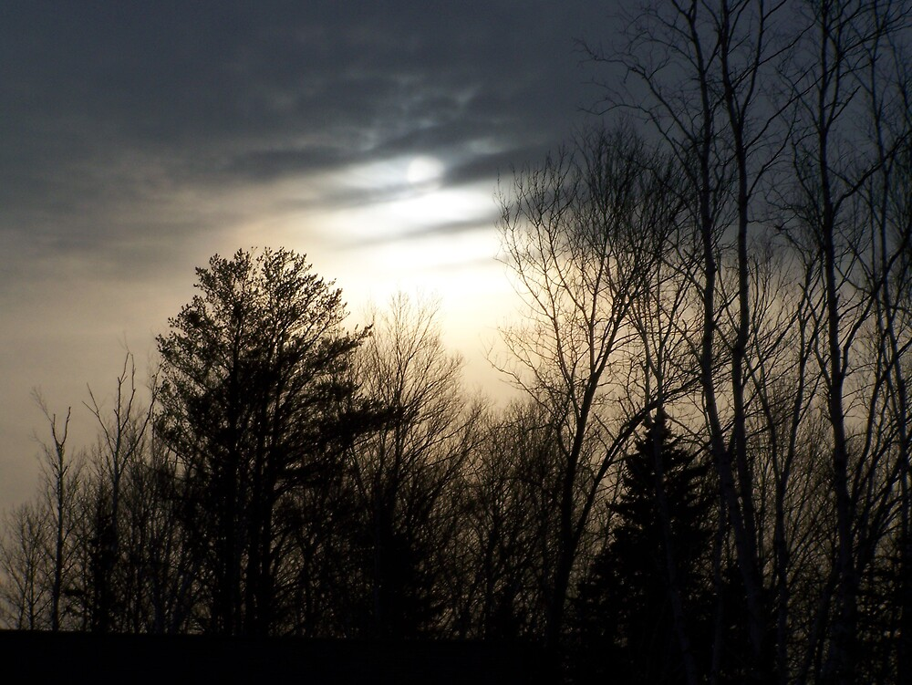 the perfect sun shine behind the tree's by dianeschafbuch