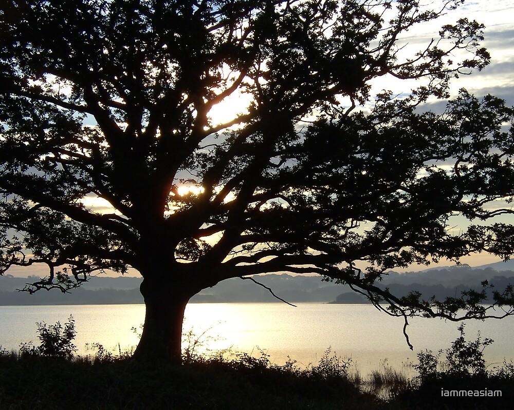 Oak Tree at Sunrise by iammeasiam