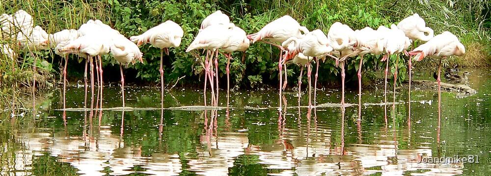 Pink Flamingos by Joandmike81