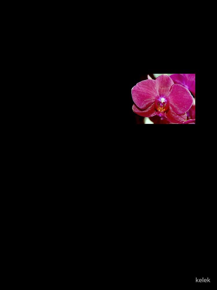 Orchid Series by kelek