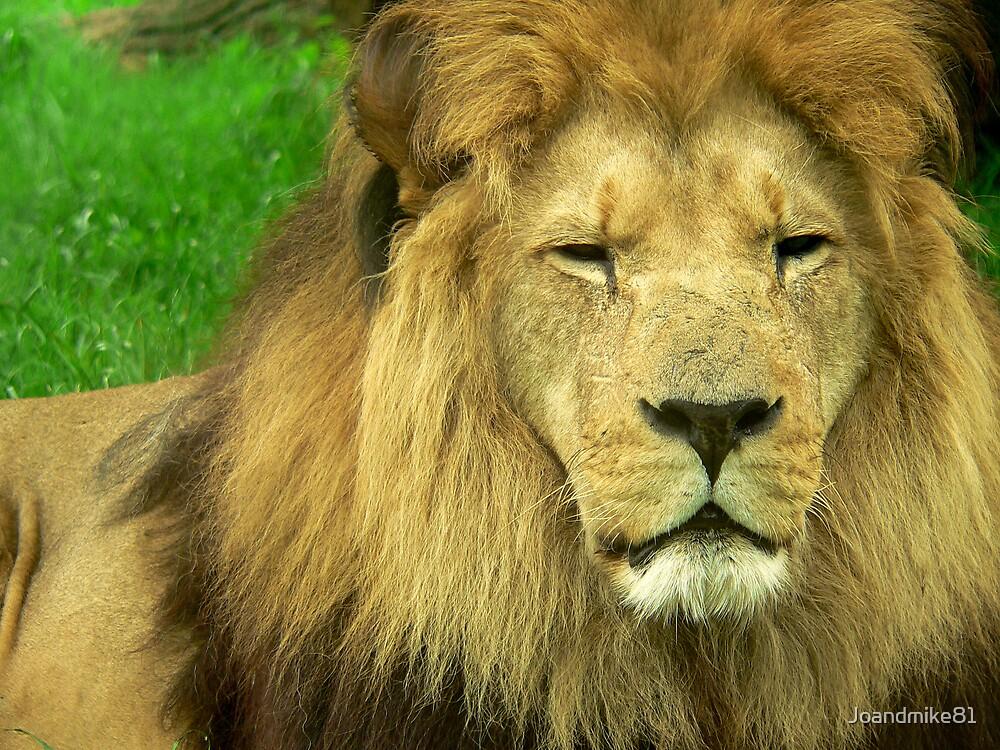 Big Lion by Joandmike81