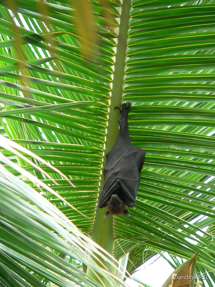 Fruity Bat by Joandmike81