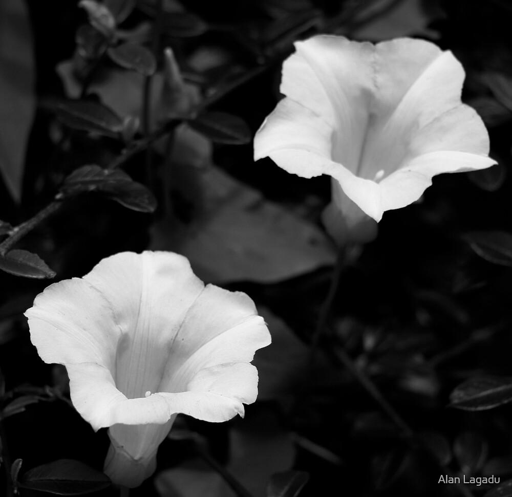 B&W white flowers by Alan Lagadu
