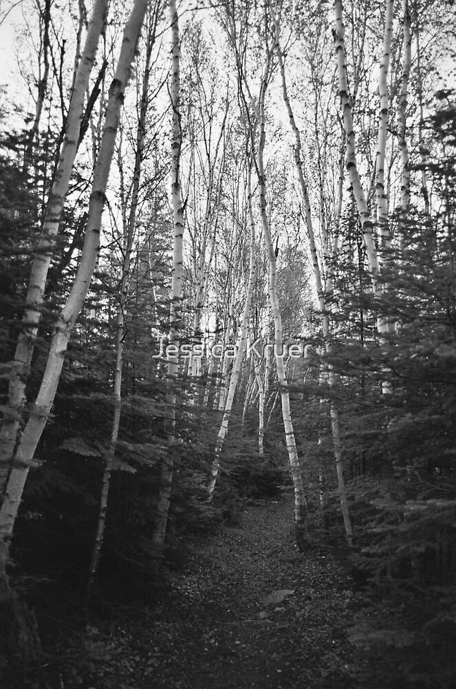 Birch Forest by Jessica Kruer