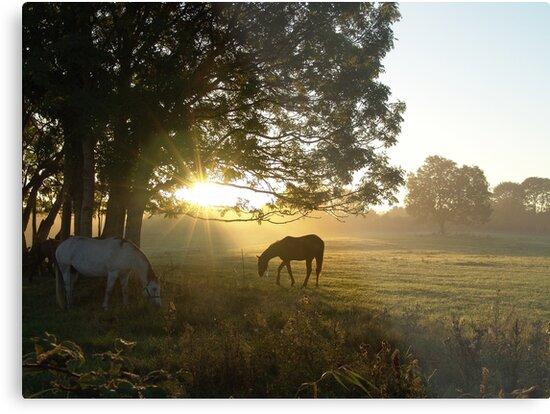 misty morn 2 by Sean Farragher