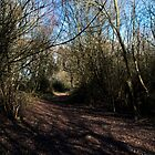 Woodland Path by Country  Pursuits