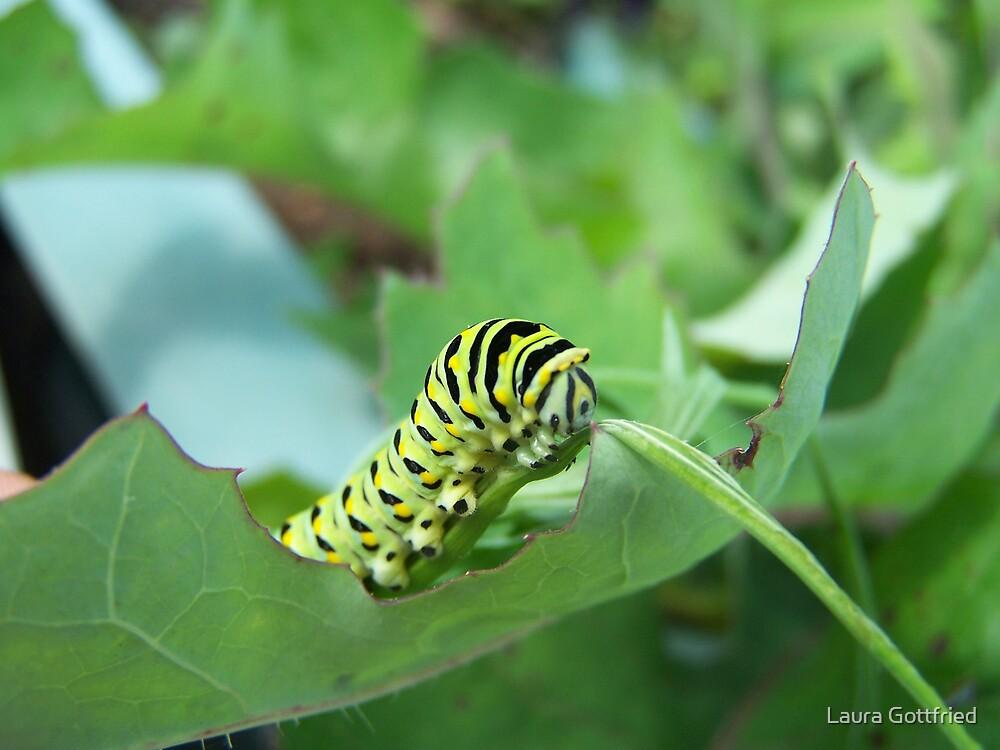 Caterpillar by Laura Gottfried