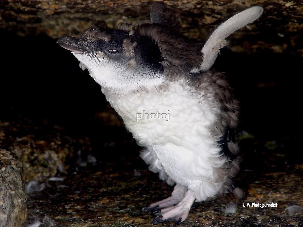 photoj 'Wow I'm Flying - Tas Penguin' by photoj