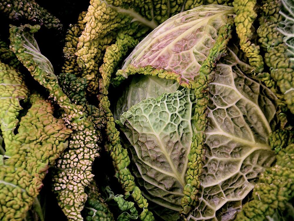 Lettuce Head by John Matthews