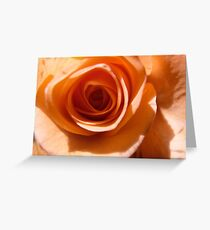 Apricot Rose Detail Greeting Card