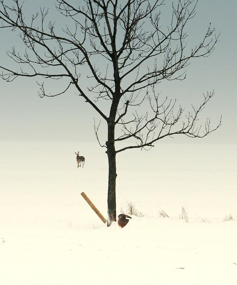 Splitting hares by Alan Mattison
