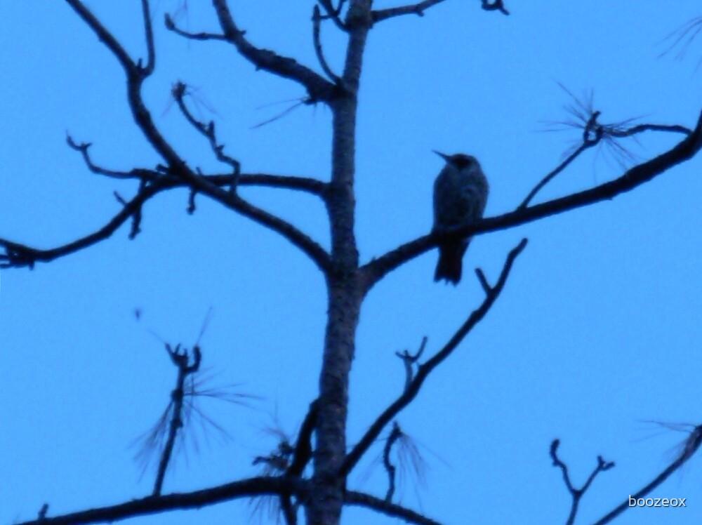 Bird in Tree by boozeox