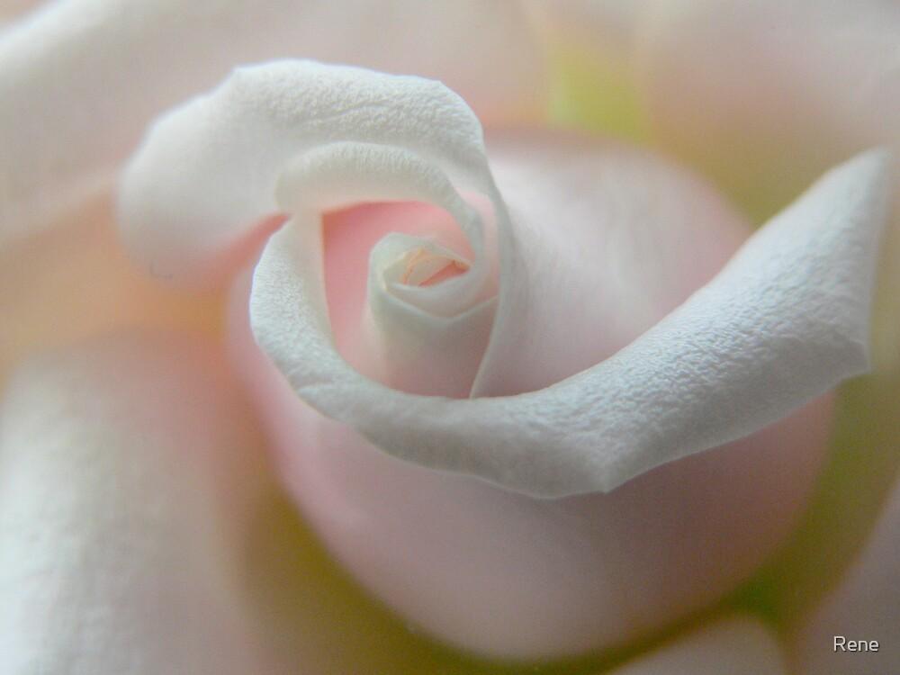 Rene's Roses by Rene
