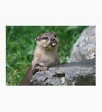 Cheeky otter Photographic Print