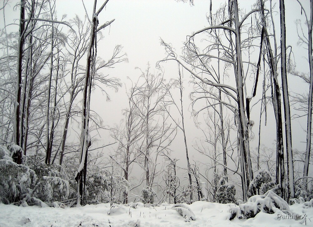 Snow Trees by PantherX