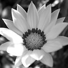Flower by emmajc