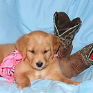 Rosie The Cowgirl Puppy by goldnzrule