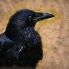 Blackbird by redsangre