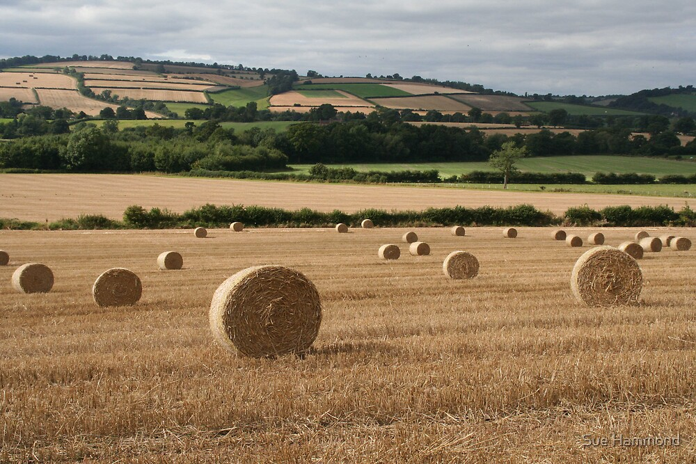Country bales by Sue Hammond