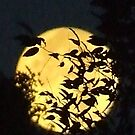 Moon Over N,Y by Lisa Woodcock