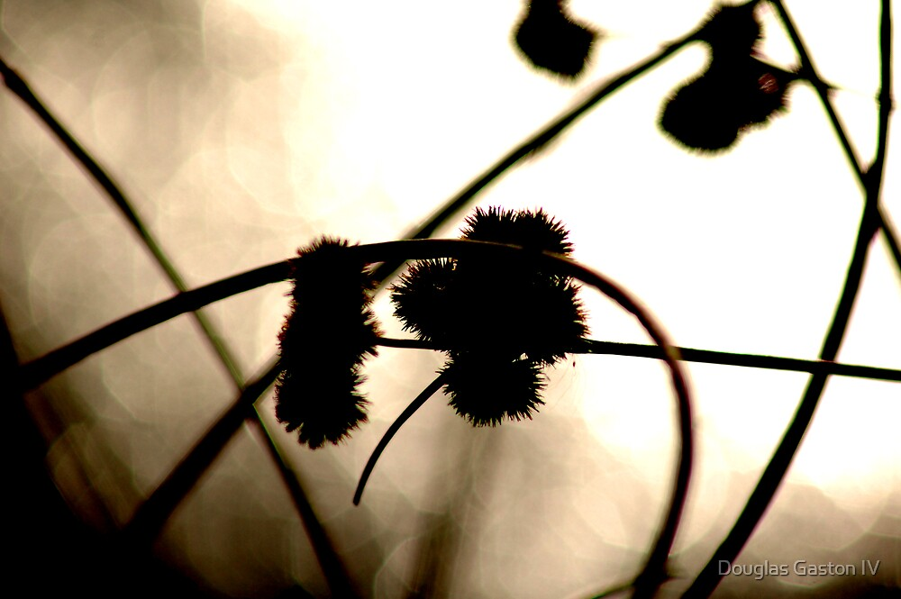 Reeds by Douglas Gaston IV