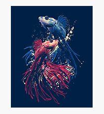 Aquarium Photographic Print