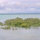 roebuck bay mangroves midday by Elliot62