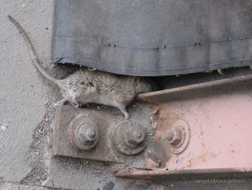 rats by Angela Mastrantonio