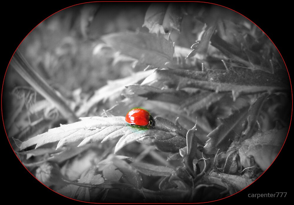 Lady bug by carpenter777
