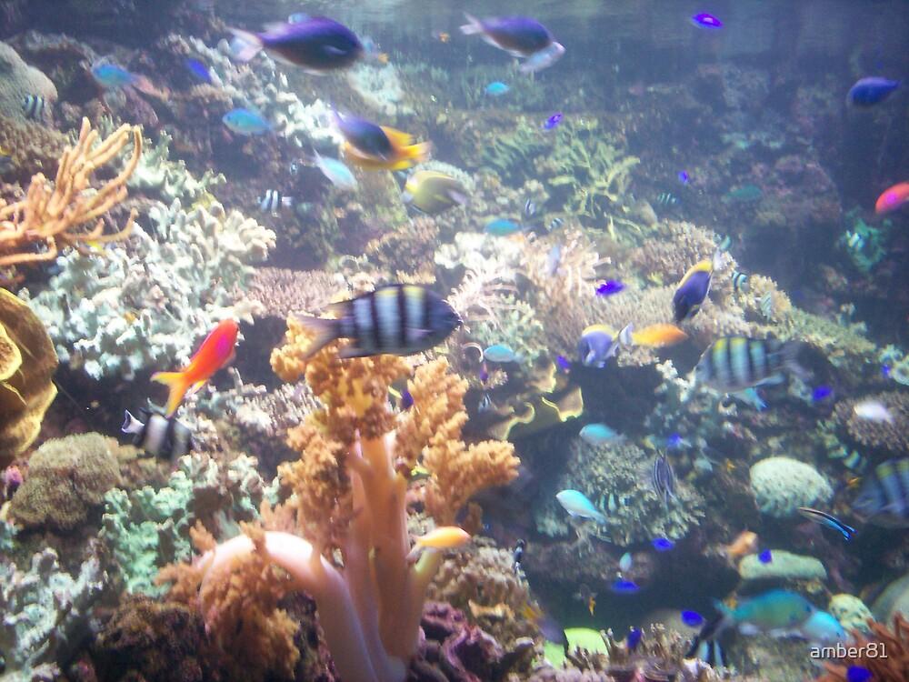 fishy..fishy..fishy..fiiishyy by amber81