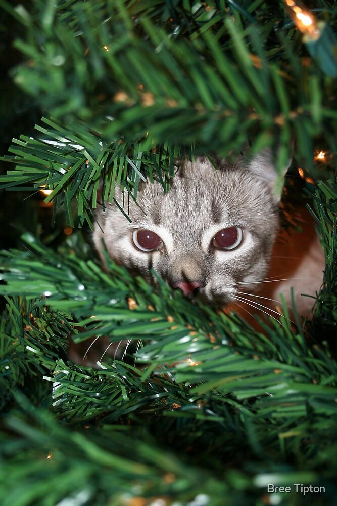 Christmas Tree Kitten by Bree Tipton