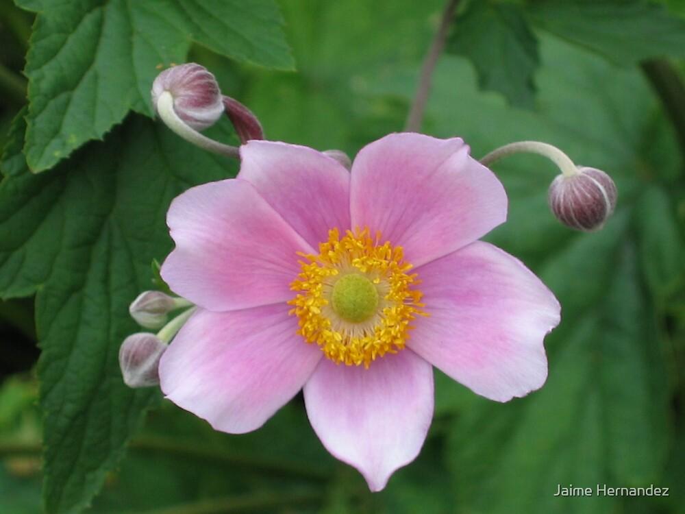 Pretty Flower by Jaime Hernandez