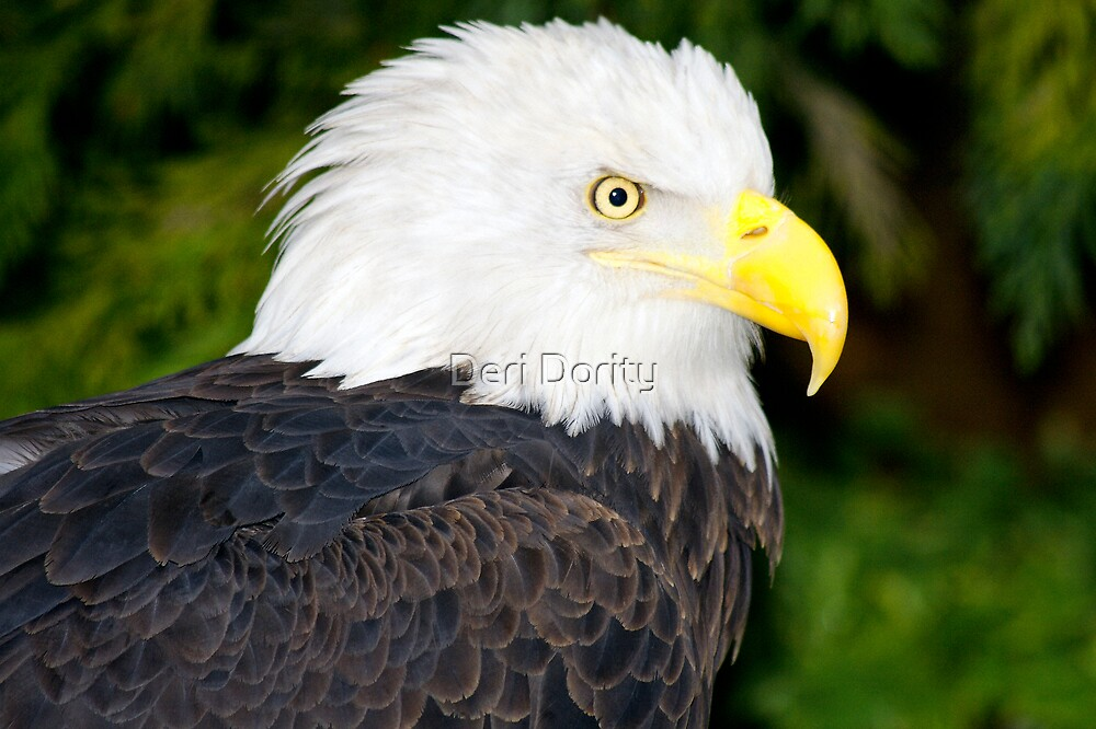 The eagle by Deri Dority