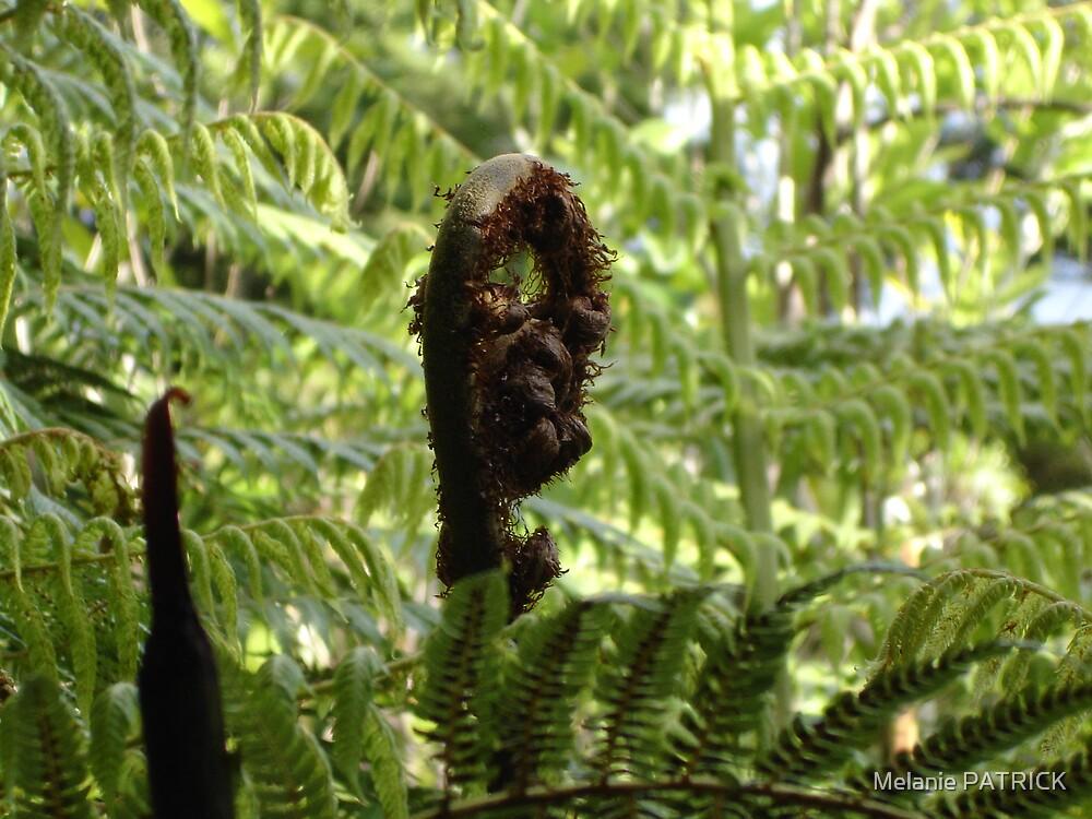 New Zealand Fern by Melanie PATRICK