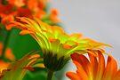 Light Bulb Flower by John Velocci