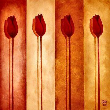 Tulip Shadows by peggygarr