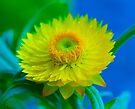 Fuzzy Yellow by John Velocci