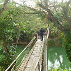 Bamboo Bridge by lizdomett