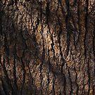 Bark by Alex Smith