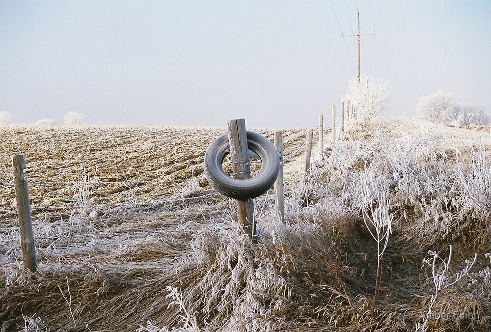 The tire by Amber Finan