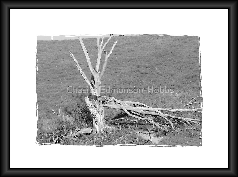 Tree all alone by Chasity Edmonson-Hobbs