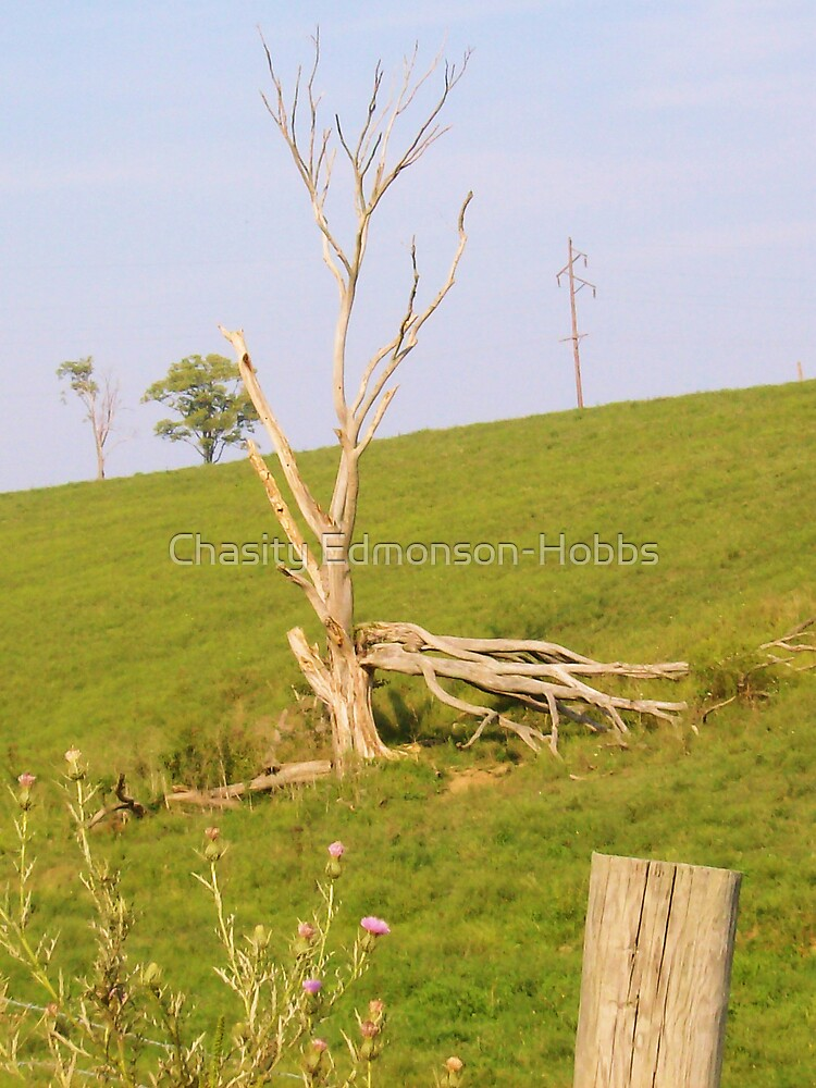 Tree different angle by Chasity Edmonson-Hobbs